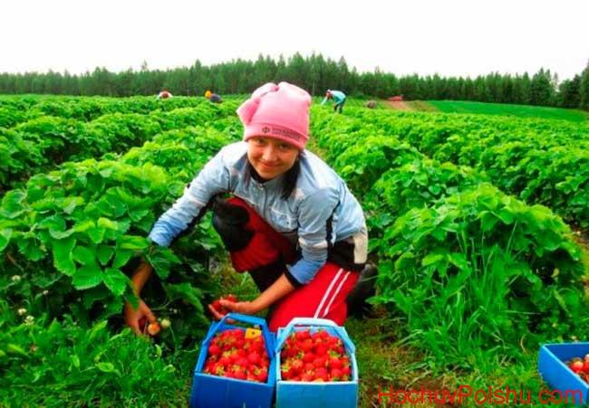 работа в Польше для белорусов 2017, вакансии