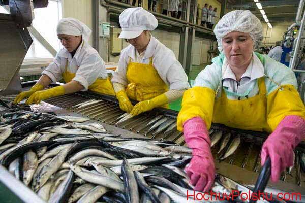 работа на рыбном завводе