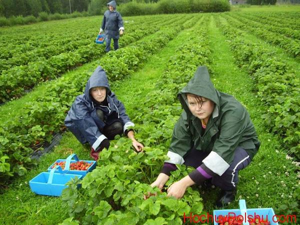 сезонная работа в Польше 2019