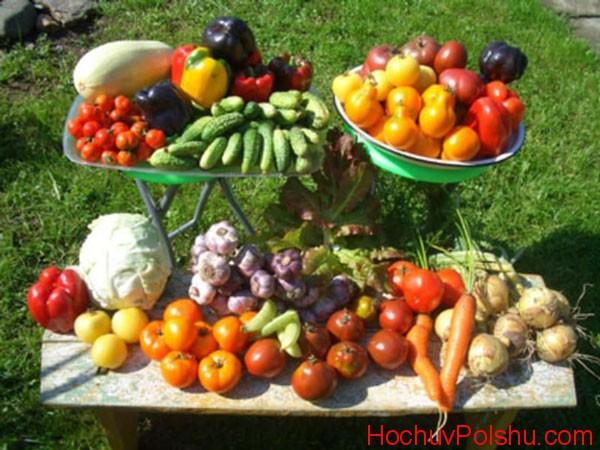 сбор овощей
