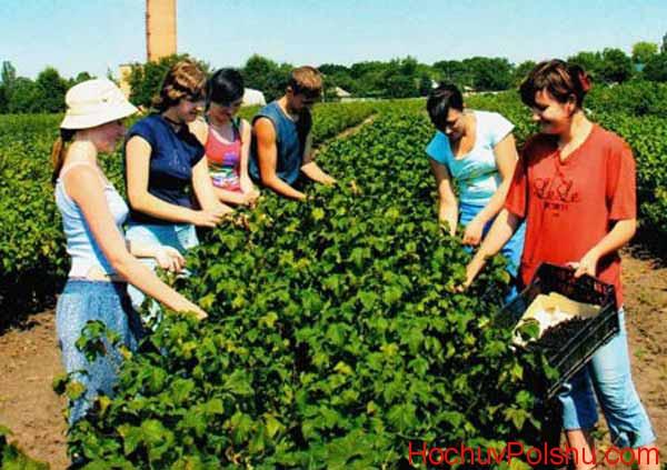 женщины на сельхозработах