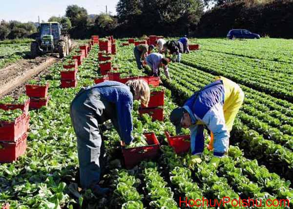 сборщики фруктов и овощей