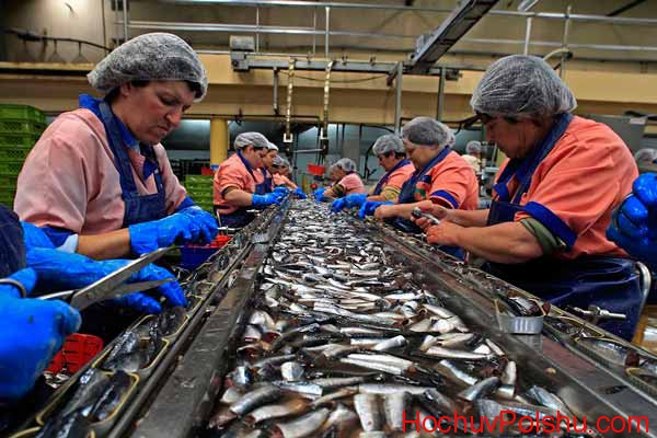 чистка рыбы и рыбных продуктов