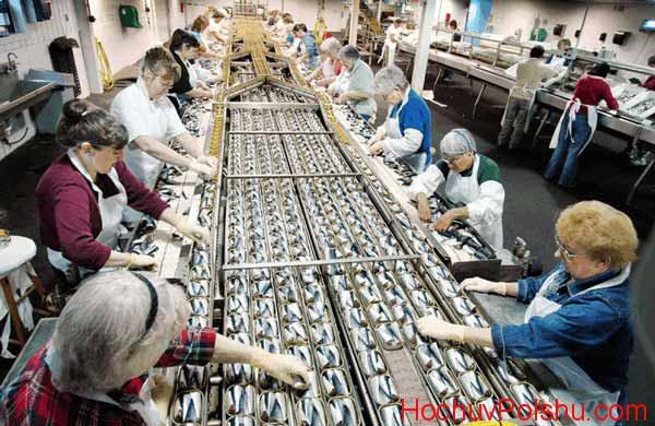 Официальная работа на рыбном заводе в Польше