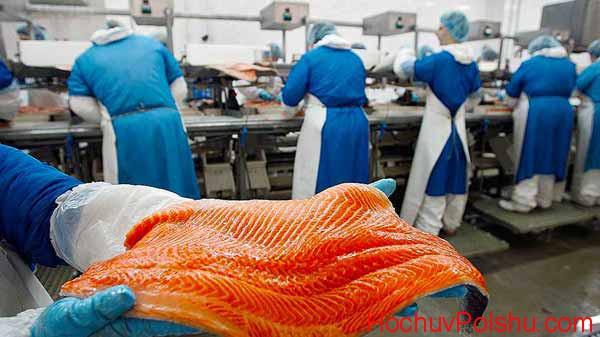 Преимущества работы на рыбном заводе в Польше