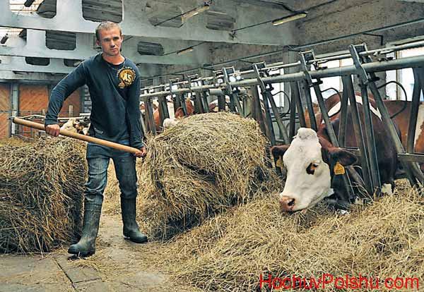 Що пропонують фермери