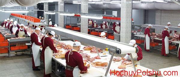 предложение работы в 2018 году в Польше на мясокомбинате