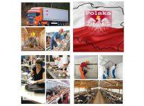 Уровень заработной платы и условия работы в Польше для украинцев