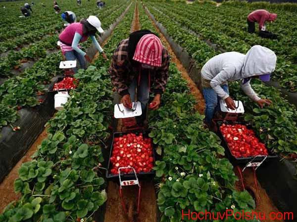 Работа по уборке урожая