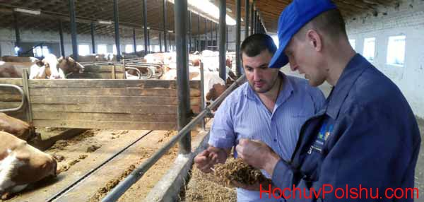 Вакансии работы в Польше на ферме для украинцев