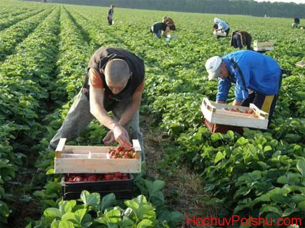 Работа в Польше в сельском хозяйстве